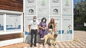Yaralı çoban köpeği, tedavisinin ardından sahiplendirildi